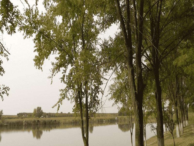 conopljansko-jezero-conoplja-1