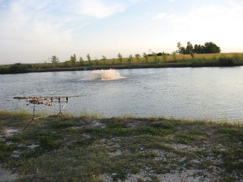 jezero-backi-jarak-areator