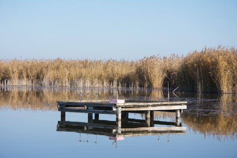 jezero-joca-zrenjanin-talpa