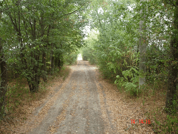zmajevacka-jezera-put