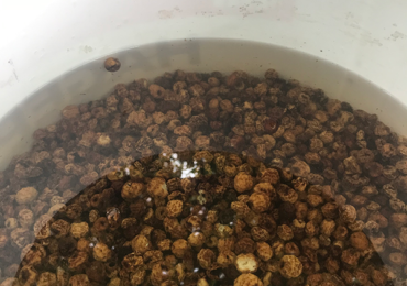 nivo-vode-u-kanti-tajger